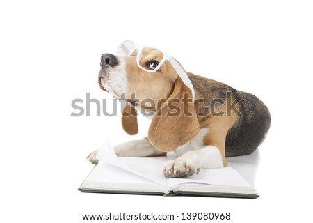 Beagle is reading a book - stock photo