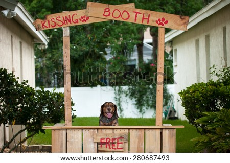 Beagle sitting in a kissing booth
