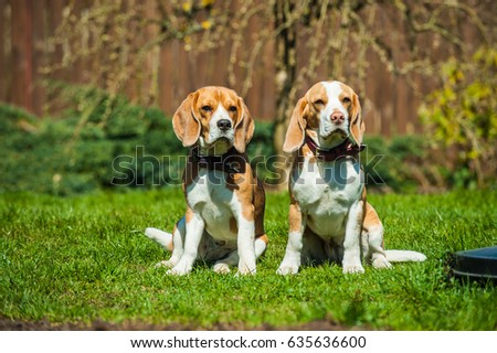 Beagle Two girls sitting in the garden