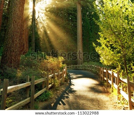 beams in sunny forest - stock photo