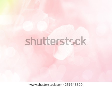 bean flowers with in soft style background - stock photo