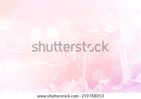 bean flowers with in soft style background