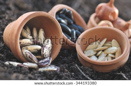 beans and other seeds in little pots on the soil  - stock photo
