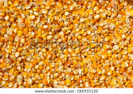 Beans of corn for background