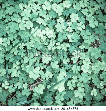 Bear Clover Leaf Green - stock photo