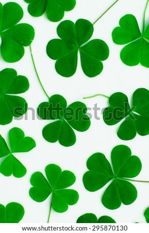 Bear Clover Leaf Green, background - stock photo