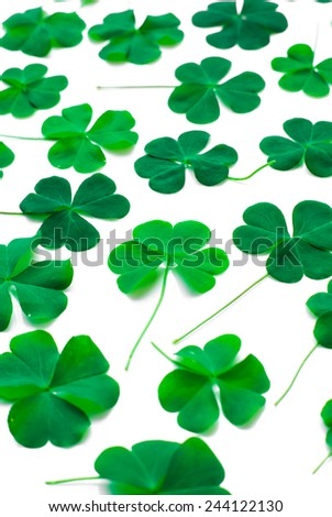 Bear Clover Leaf Green, background foe St.Patrick Day - stock photo