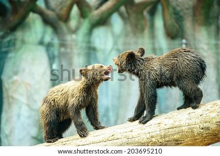 Bear Cub - stock photo