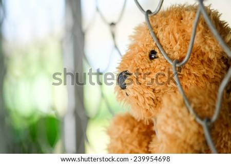 Bear doll - stock photo
