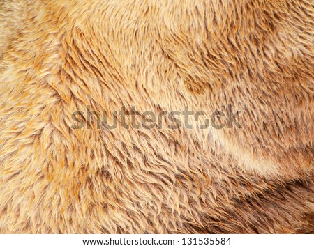 Bear fur texture - stock photo