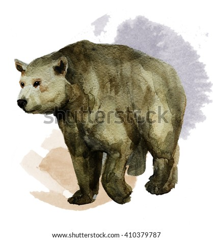 Bear hand painted watercolor illustration isolated on white background