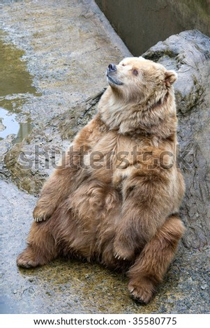 Bear in a zoo of Riga