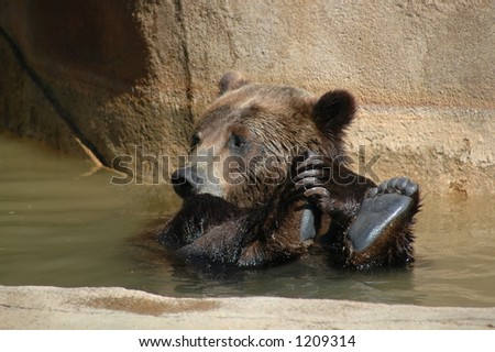 Bear Playing in Water