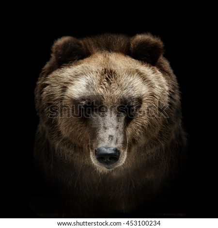 Bear Face Stock Images, Royalty-Free Images & Vectors ...