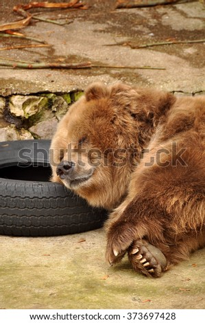 Bear sleeping on the wheel
