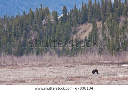 Bear Viewing in Denali National Park