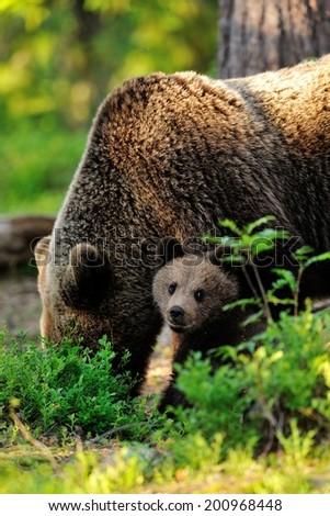 Bear with cub - stock photo