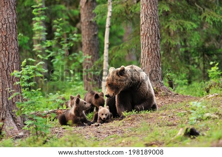 Bear with cubs in forest - stock photo