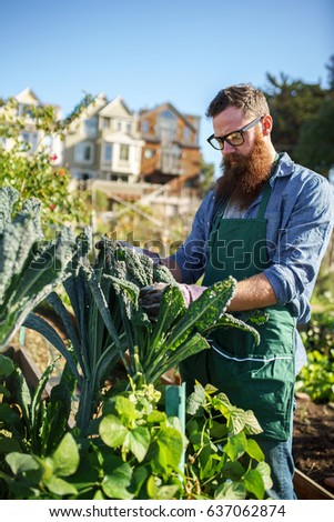 bearded man inspecting kale crops in communal urban garden