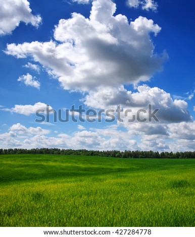 Beatiful green field with blue sky. - stock photo