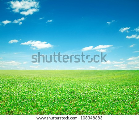 Beatiful morning green field with blue heaven