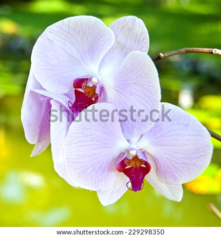 Beatiful orchids on colorful background - stock photo