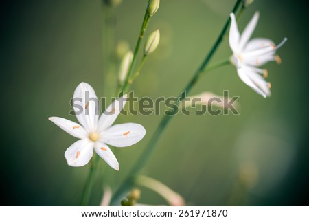 Beatiful wild flower in green meadow - stock photo