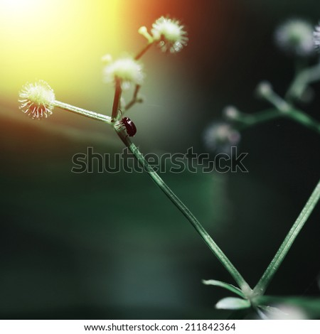 beatles at plant at sunrise mystery background - stock photo