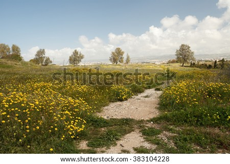 Beautifu spring landscape. Flowering meadow and the path