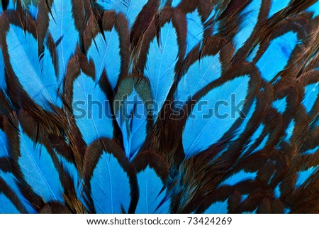 Beautiful abstract background consisting of blue hen saddle feathers
