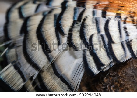 Beautiful abstract background consisting of golden pheasant