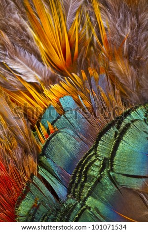 Beautiful abstract background consisting of golden pheasant feather - stock photo
