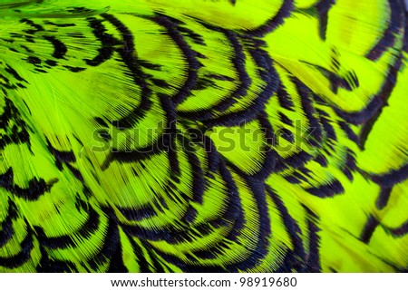 Beautiful abstract background consisting of lime green chartreuse dyed lady amherst pheasant feathers - stock photo
