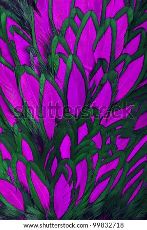 Beautiful abstract background consisting of pink hen saddle feathers - stock photo