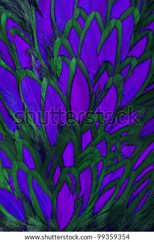 Beautiful abstract background consisting of purple hen saddle feathers - stock photo