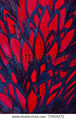 Beautiful abstract background consisting of red hen saddle feathers - stock photo