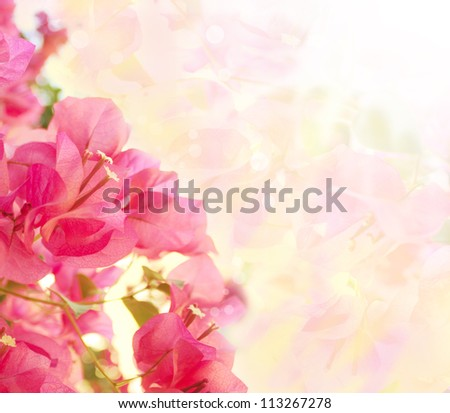 Beautiful abstract floral background with pink flowers. Border design - stock photo