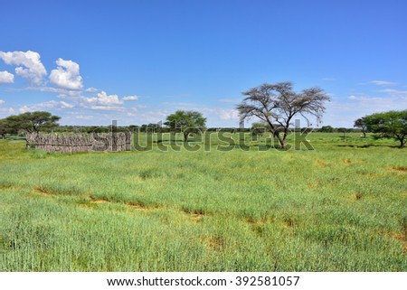 Beautiful african landscape with corral, Waterberg plateau, grassland and umbrella acacias