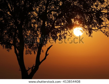 Beautiful African sunrise with silhouetted tree (including copy space)