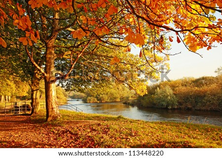 Beautiful afternoon in the autumnal park - stock photo