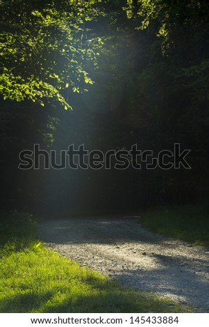 Beautiful afternoon light in a forest