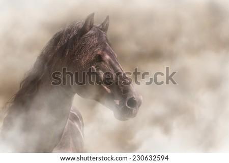 Beautiful alert Frisian black brown stallion horse in fog mist smoke looking curious worried free majestic regal mythological - stock photo