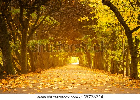 Beautiful alley in the yellow autumnal park