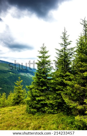 Beautiful alpine landscape with pines in Romania