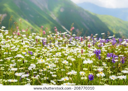 Beautiful alpine meadow in the Caucasus mountains. Upper Svaneti. Georgia - stock photo