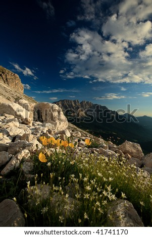 Beautiful alpine scenery (Dolomites, Italy) - tiny yellow flowers in the foreground, dramatic sky, warm evening light make for the beauty of this image - stock photo