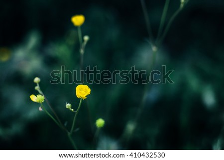 beautiful amazing yellow flowers on background of sunny grass in summer woods - stock photo
