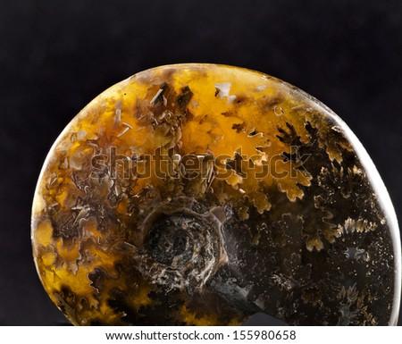 beautiful ammonite stone close up surface isolated on black  background  - stock photo