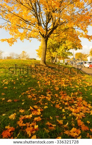 Beautiful and bright autumnal trees in Airdrie, Scotland