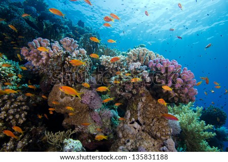 Beautiful and Colorful Coral Reef